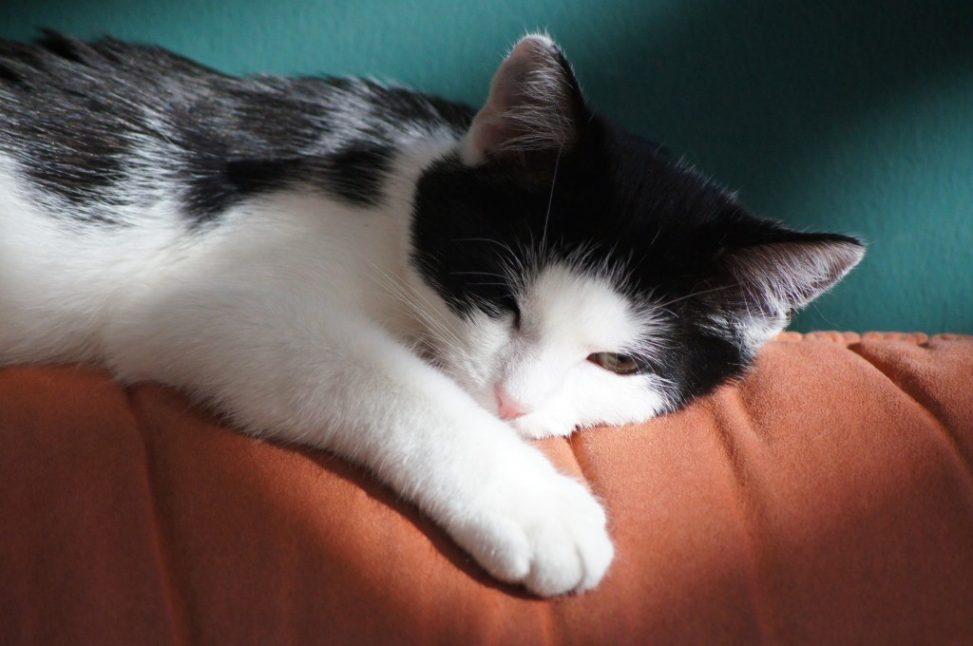 Katze! Foto: Sebastian Wallroth. Lizenz: CC-BY-4.0